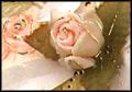 Inviti per cerimonie  - Comunione Cresima Matrimonio